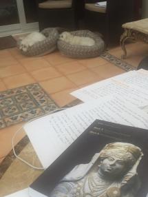 My study companions